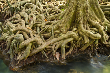 Crystal stream and the mangrove root of art