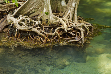 Clear freshwater meets with seawater from the mangrove