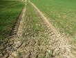 Angetrocknete Reifenspuren eines Traktors auf einem Feld