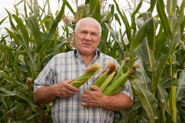 man on  field corn