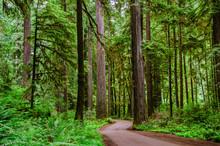 Winding polna droga przez las