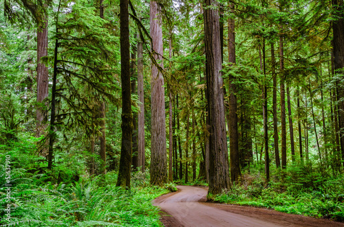 A Winding Unpaved Road Through a Forest