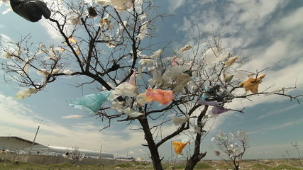 Tree Covered Plastic Bags Near Landfill