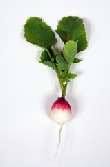 Freshly harvested radish with leaves © Arena Photo UK