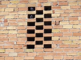 piccioni tra i mattoni di un muro