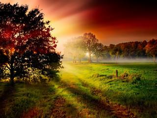 Baum Silhouette vor bunten Sonnenstrahlen der aufgehenden Sonne