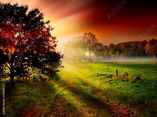 Baum Silhouette vor bunten Sonnenstrahlen der aufgehenden Sonne - 51646727