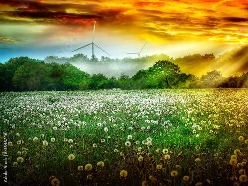 Feld  von Pusteblumen im Sonnenaufgang vor Windrädern vor - 51646746