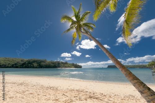 Fototapeten,tropisch,natur,sommer,baum