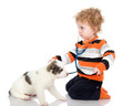 little boy examining puppy dog. isolated on white