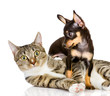 dog and cat together. the puppy looks at a cat. isolated on whit