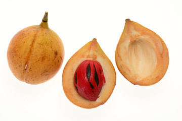 Nutmeg Sectional View With Seed