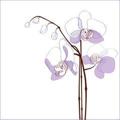 Elegance branch of purple orchids