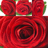 Collage red roses - Collage rose rosse