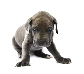 Dog puppy on white background