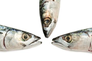 mackerel composition over white background