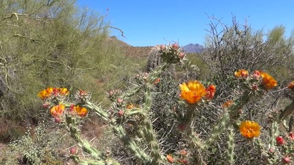 Staghorn Cholla and Mountain View
