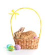 Fluffy foxy rabbit in basket with Easter eggs isolated on white
