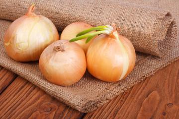 Ripe onion on the oak table on sacking