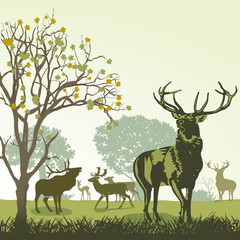Hirsche und Wild im Herbst