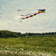 kite flying in meadow