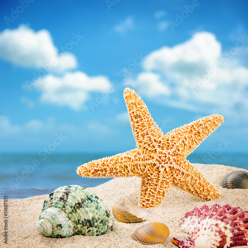 Sea star and colorful shells
