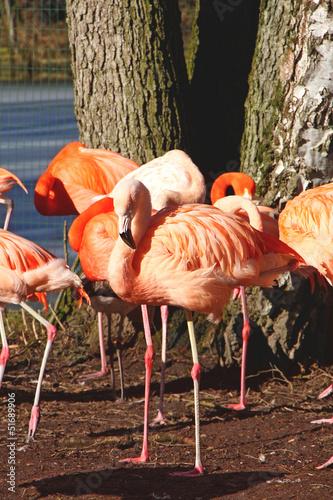 Flamingo w słońcu