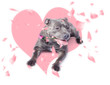 Dog with pink rose on heart shape background