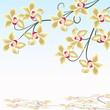 blüte, orchidee,  floral, frühling, spiegelung,  vital, wellness
