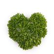 isolated parsley leaf