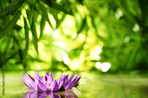 lotus flower floating on water