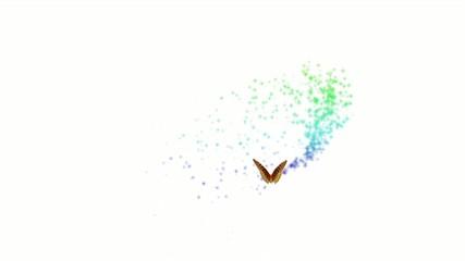 Mariposa mágica del color
