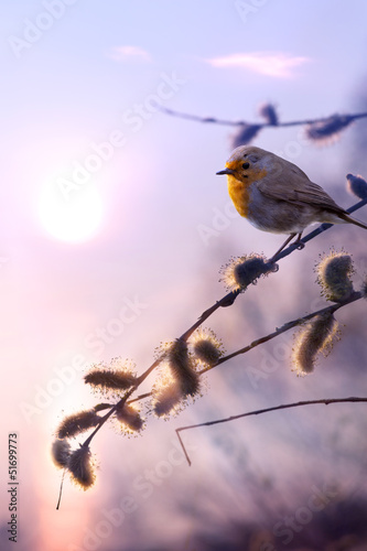 art beautiful spring morning nature background