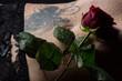 Bauch einer Frau mit Rose und Tattoo