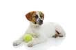Young dog with green ball toy lying over white background.