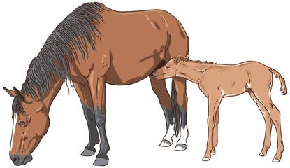 Mare feeding her foal