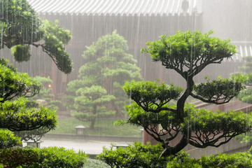 bonsai trees in Chi Lin Nunnery in rain