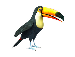 Toucan, Isolated On White Background