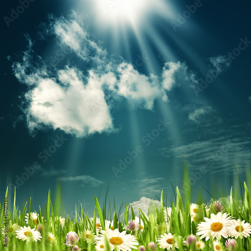 Beauty summer field. Abstract natural backgrounds