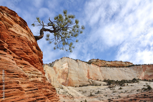 Pine Tree on top of a Sandstone Formation in Zion
