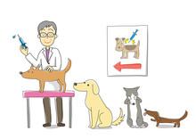Szczepienia dla psów