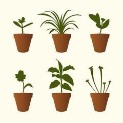 Set of plants in flowerpots