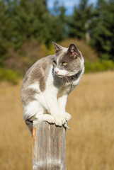 Cat sitting on fence post