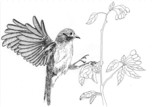 illustration bird