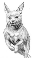 sketch dog Miniature Pinscher