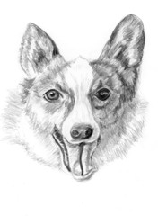 sketch dog corgi
