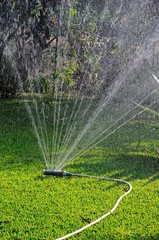 Oscillating garden sprinkler on grass © Arena Photo UK