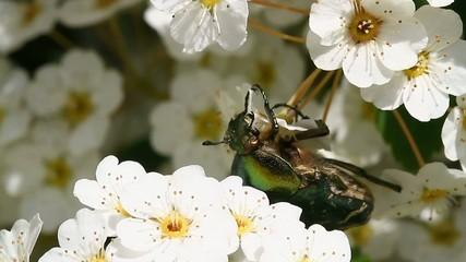 Insecte repas