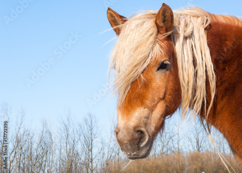 Portrait of a brown horse with blonde manes and eye lashes