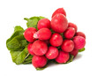 radish bunch isolated